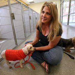 Shaunie Larsen has a meet and greet with her dog Missy, right, and soon-to-be-adopted Roland, who is a blind senior dog, at the West Valley City Animal Shelter in West Valley City on Saturday, Sept. 1, 2012. Missy and Roland got along well and Larsen decided to adopt Roland.