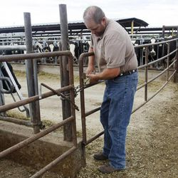 Dairy farmer Ron Gibson talks Wednesday, Aug. 29, 2012, about the hardships that this season has brought on with costs of feed rising and heat.