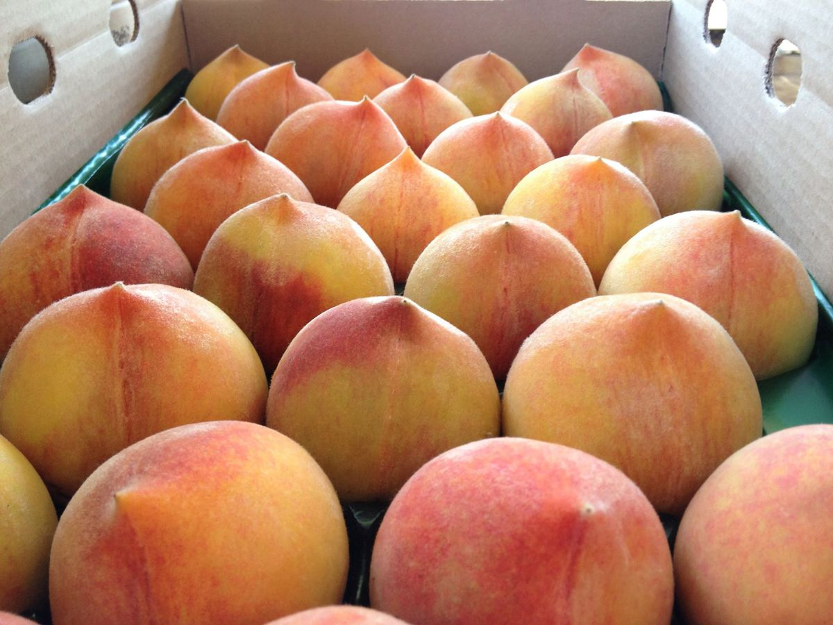 Sun Crest peaches from Masumoto Family Farm