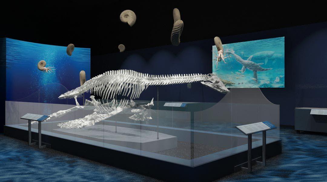 A rendering of a Plesiosaur.