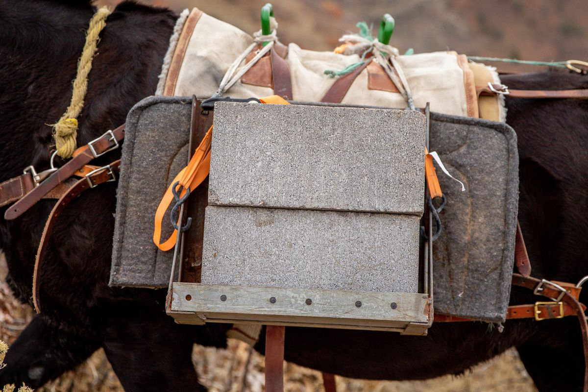 A mule carries concrete blocks that will be used to close a mine tunnel opening above Layton on Wednesday, Nov. 18, 2020. Strong Solutions was contracted by the Utah Division of Oil, Gas and Mining to close the opening. Their use of mules to transport equipment reduces the cost of the job, as compared to using a helicopter, while impacting the environment less than using motorized equipment.
