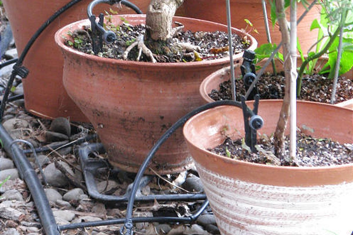 Group potted plants together and lay in each pot a small, commercially available drip tube which, in turn, feeds off a half-inch plastic pipe which, in turn, is connected to your spigot through an inexpensive water timer.