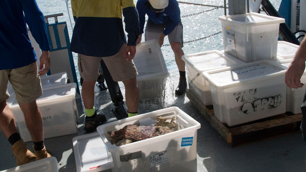 AIMS staff unload samples of coral and sand from the Great Barrier Reef, to be used in SeaSim experiments.