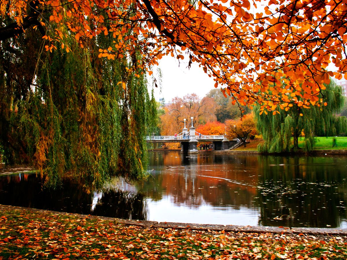 Trees in Boston's Public Garden with leaves changing from green to red and orange.