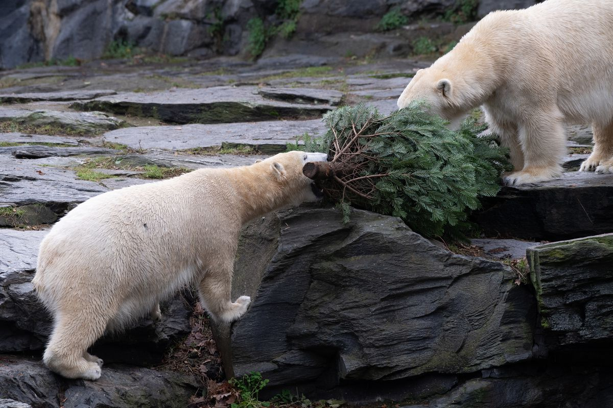 Christmas in the zoo