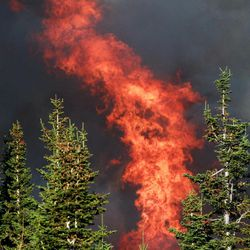 Flames burn pine trees as a wildfire spreads Sunday, Sept. 9, 2012 on Casper Mountain in Casper, Wyo. Residences and campgrounds were evacuated as the uncontained wildfire spread across the southeast portion of the mountain.