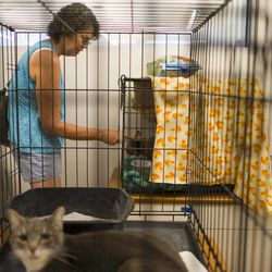 Mary Carruthers visits her cat, Freckles, at an animal shelter at Yavapai College in Prescott, Ariz., on Monday, July 1, 2013. Mary and her husband Ron believe their house survived the fire, but know that other family members' homes in Yarnell were destroyed.