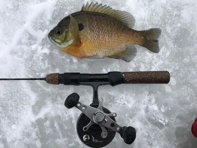 A bluegill and rod photo from ice fishing in Lake County. Credit: Charles Zheng