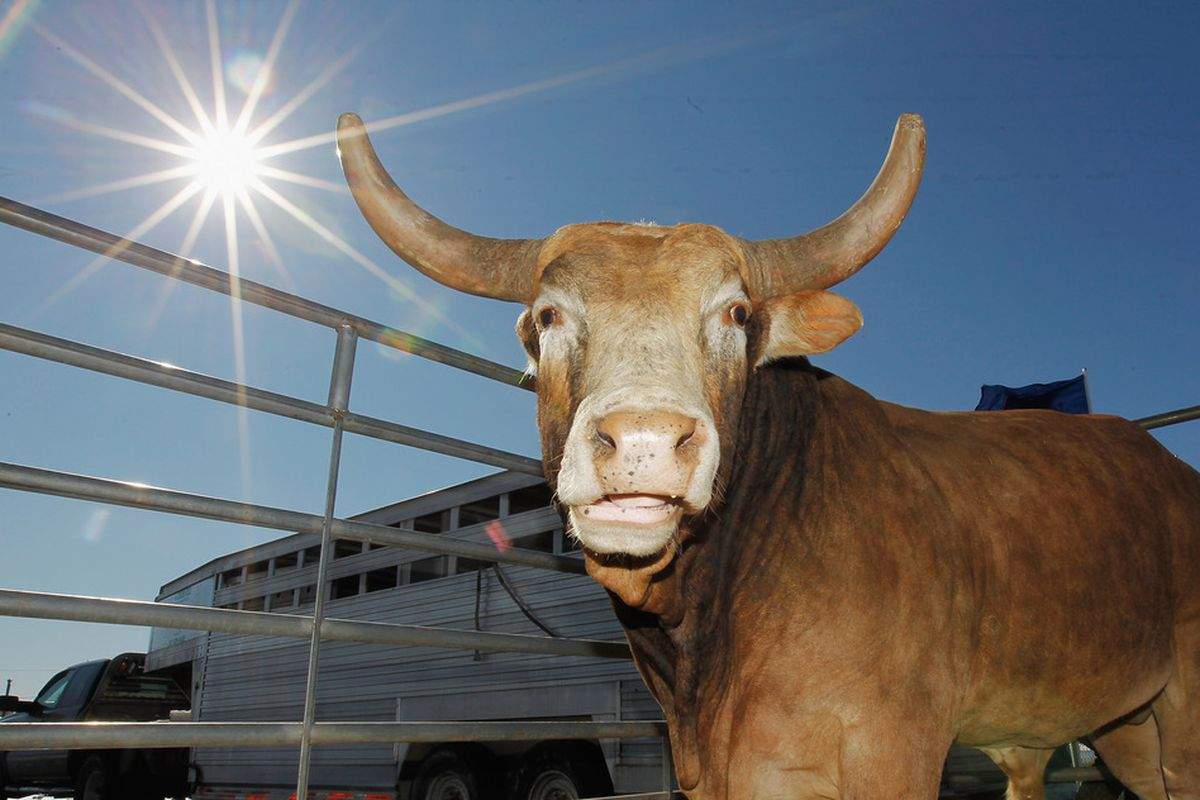 California bulls > Chicago bulls