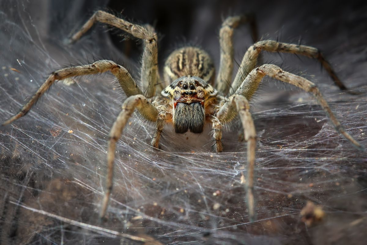 The Verge Review of Animals: spiders - The Verge