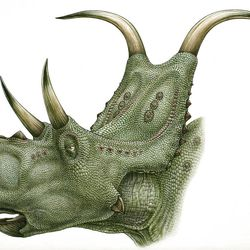 Reconstruction of Diabloceratops eatoni, one of the  eight dinosaurs discovered or named in Utah last year.