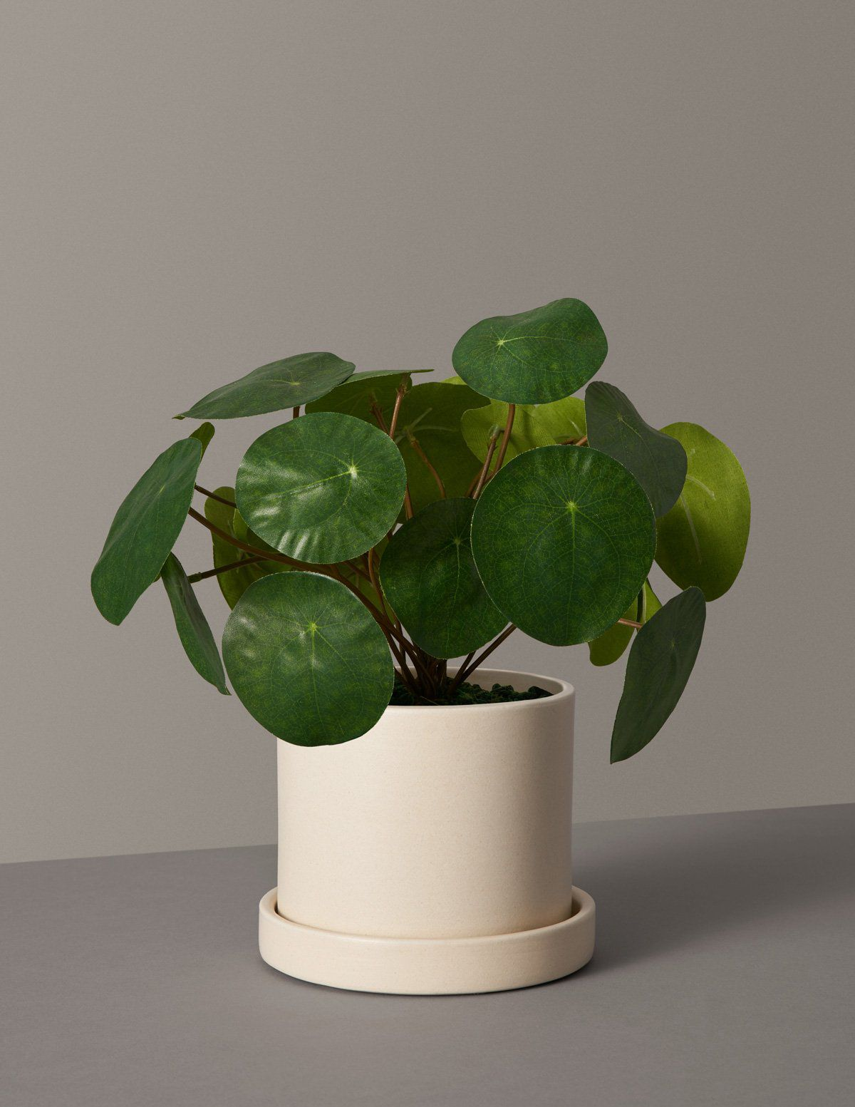 Small cream planter with coin-shaped fake plant inside.