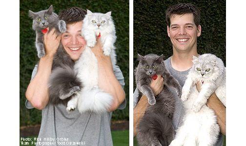 Rich Hill cats