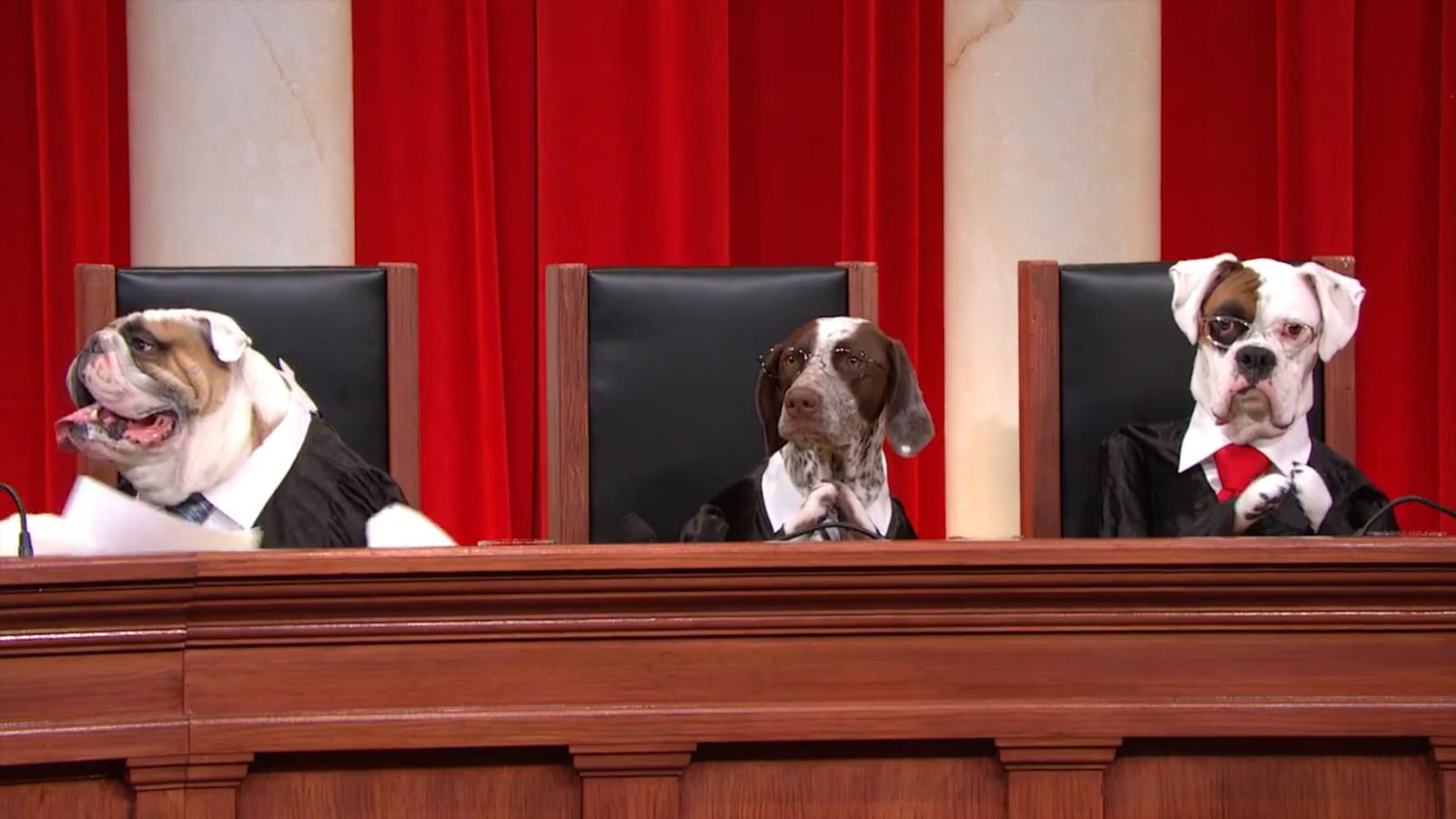 We remixed John Oliver's all-dog Supreme Court footage ...