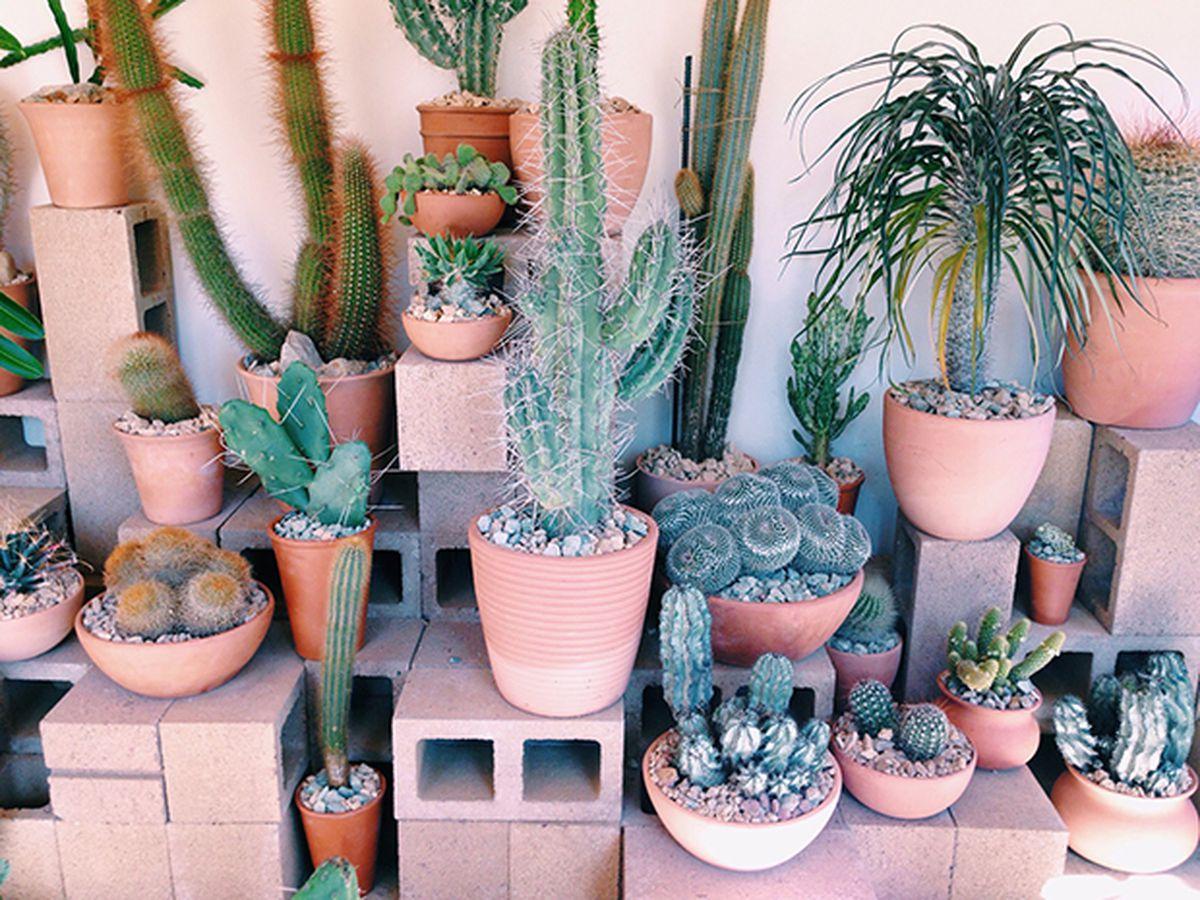 La S Top Gardens And Nurseries For Stylish Plant Life