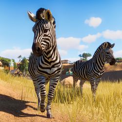 What's a zoo without zebras? <em>Planet Zoo</em> for Windows PC.