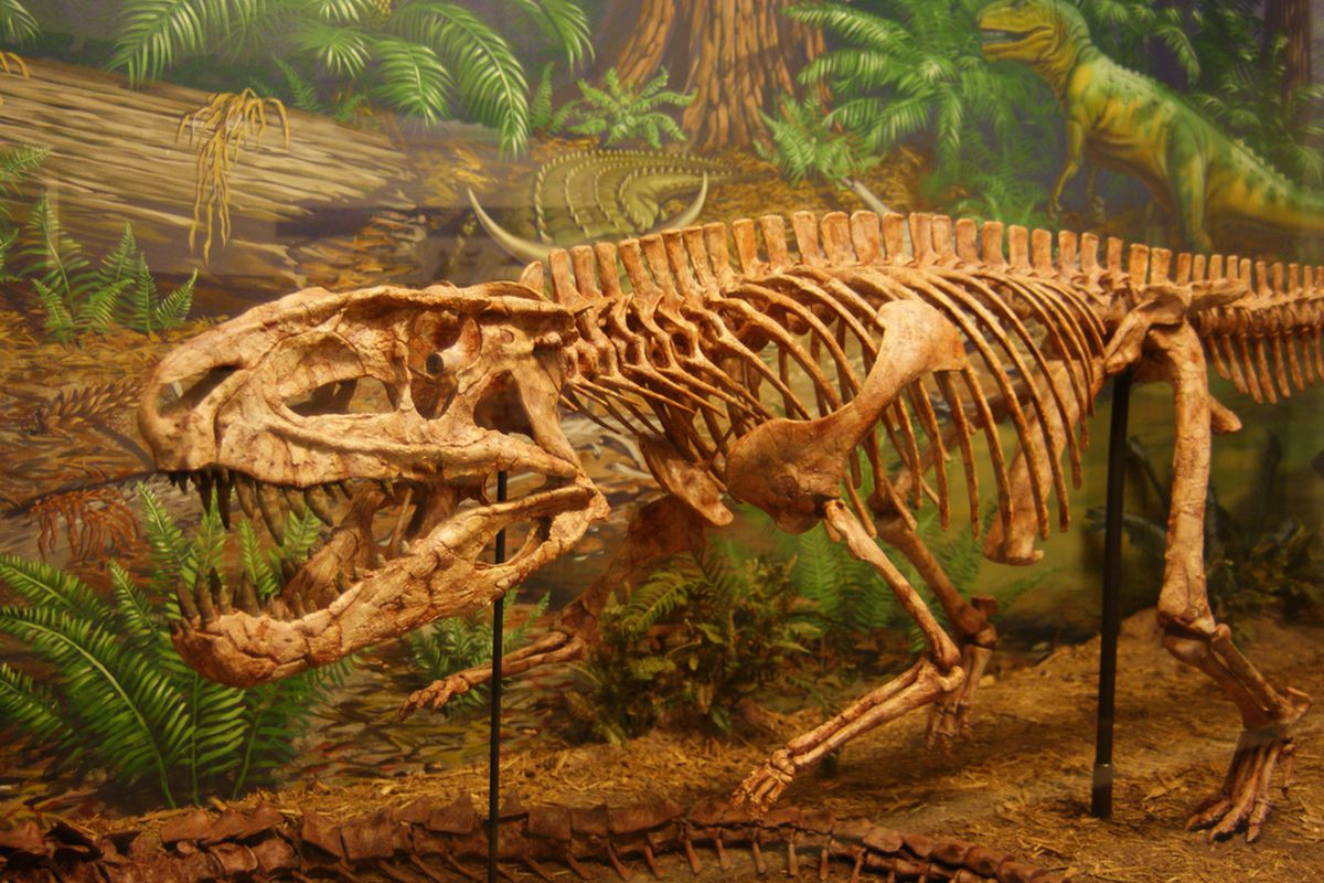 """Postosuchus, a Triassic archosaur at the Museum of Texas Tech University, by <a href=""""http://www.flickr.com/photos/31867959@N04/5748755668/"""">Dallas Krentzel on Flickr, CC-BY-2.0</a>."""