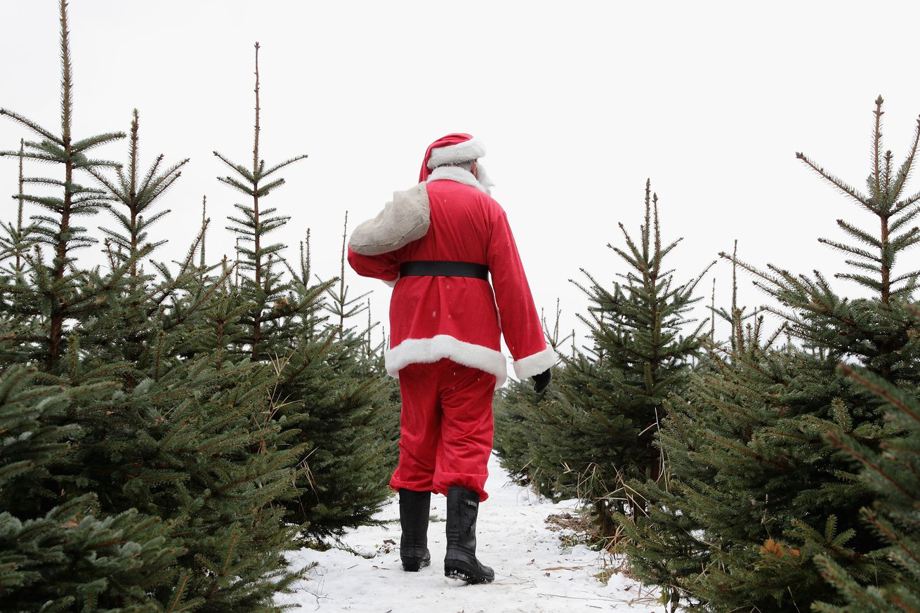 what s the most environmentally friendly christmas tree you can get
