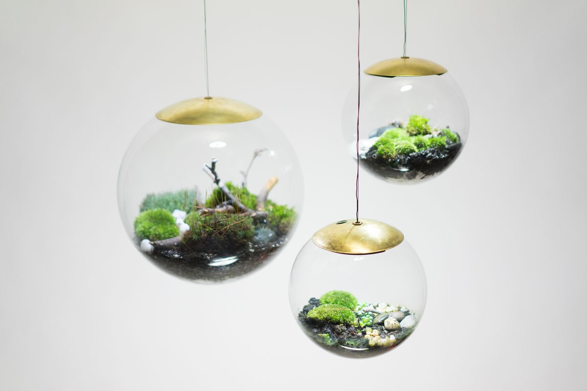 these terrarium lamps are pure plant genius curbed. Black Bedroom Furniture Sets. Home Design Ideas