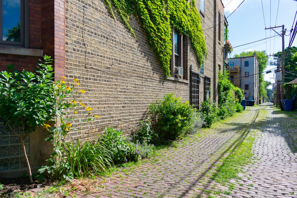 A brick building facing an alley with vines and overgrown bushes.