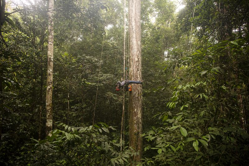 Researchers at the Amazon Tall Tower Observatory study the both the forest and the trees.