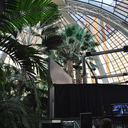 The Mirage Atrium palms will remain in place.