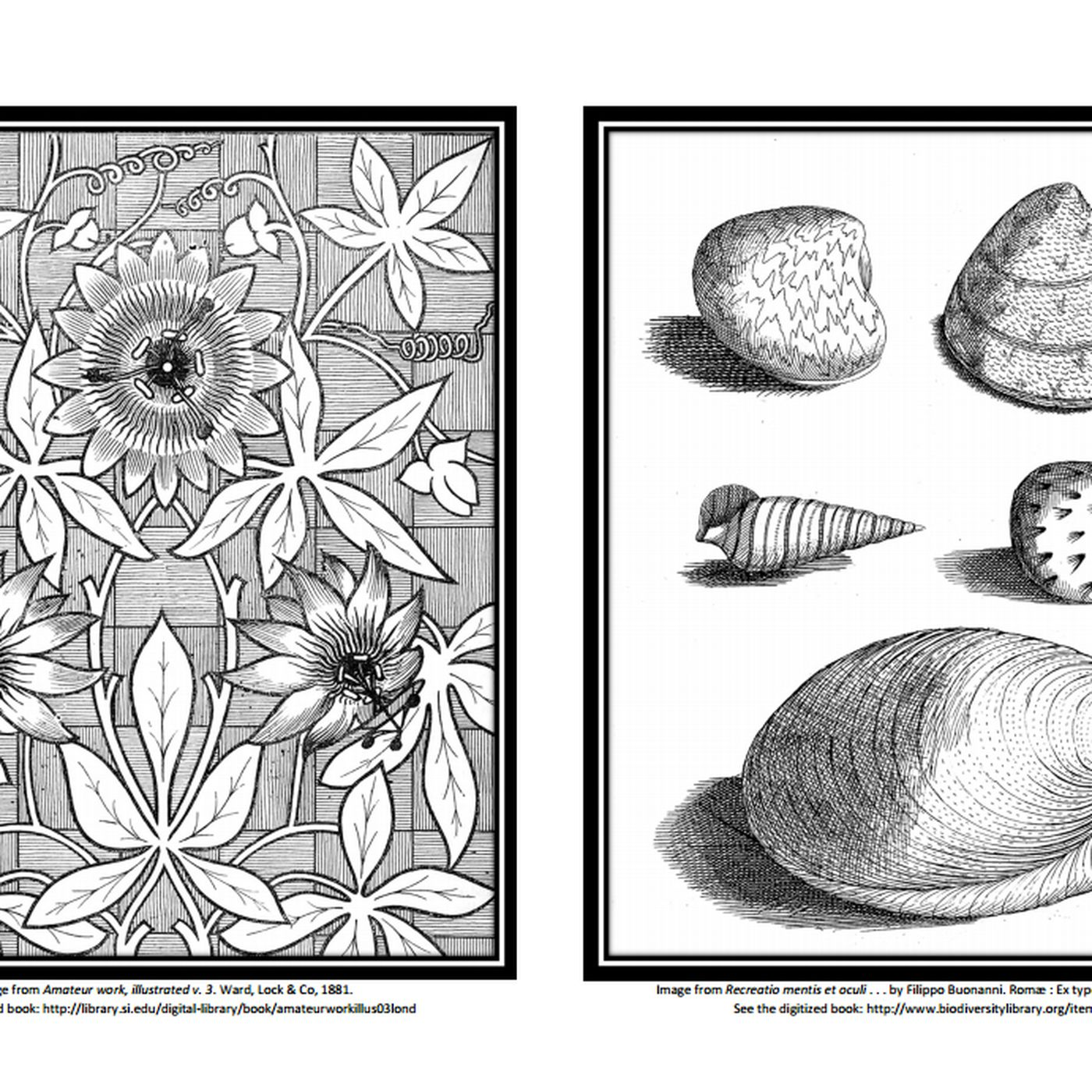 - Get Free Coloring Books From Major Libraries And Museums - Curbed