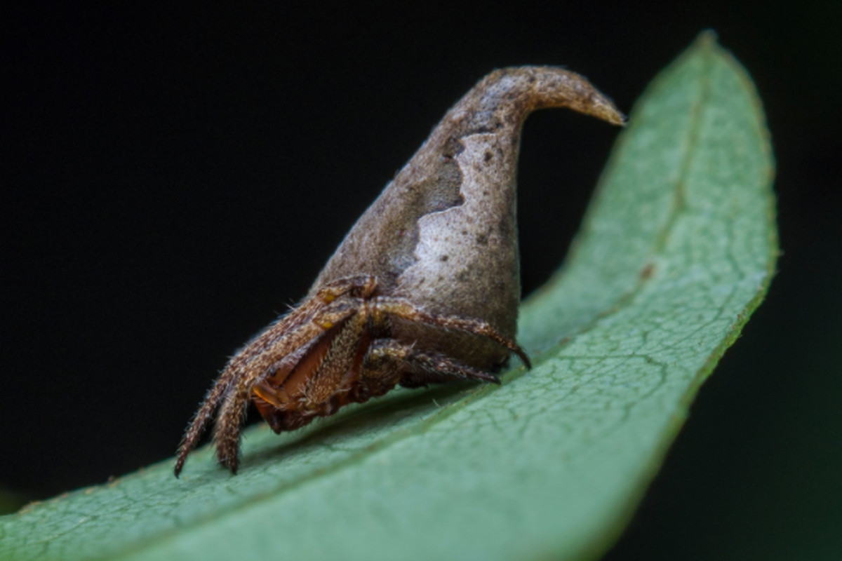 this fantastic spider resembles harry potter u0027s sorting hat the verge