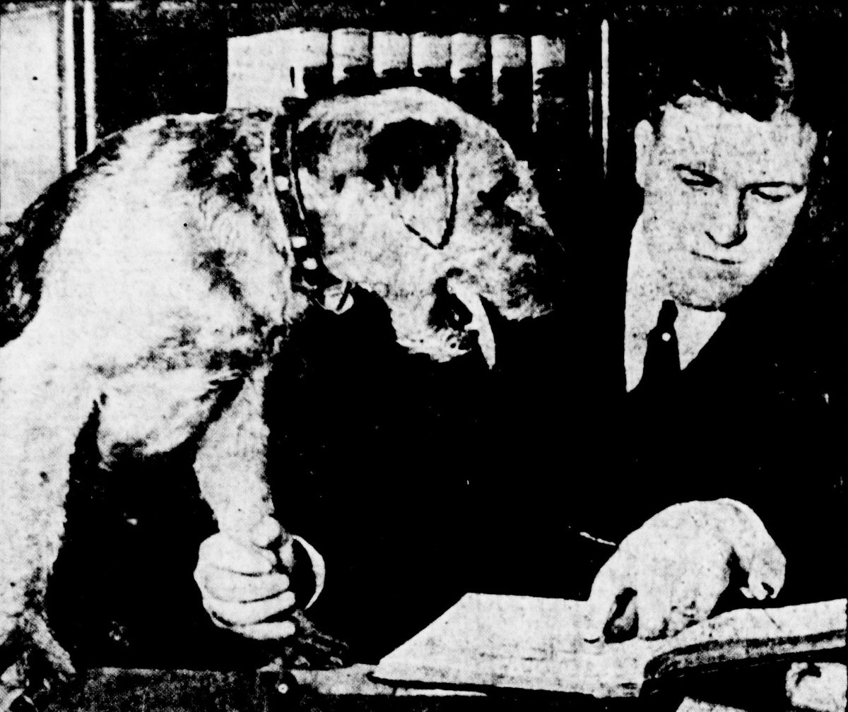 Dormie the dog on trial