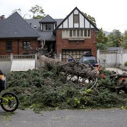 A large tree that was cut into pieces after being felled by high winds near 1700 East and Yale Avenue in Salt Lake City is pictured on Tuesday, Sept. 8, 2020.