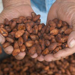 """A cacao bean farmer holds dried cacao beans during Art Pollard's 2006 trip Villahermosa, Mexico. Pollard's company, Amano Artisan Chocolate, is """"America's Most Highly Awarded Chocolate Maker,"""" according to its packaging."""