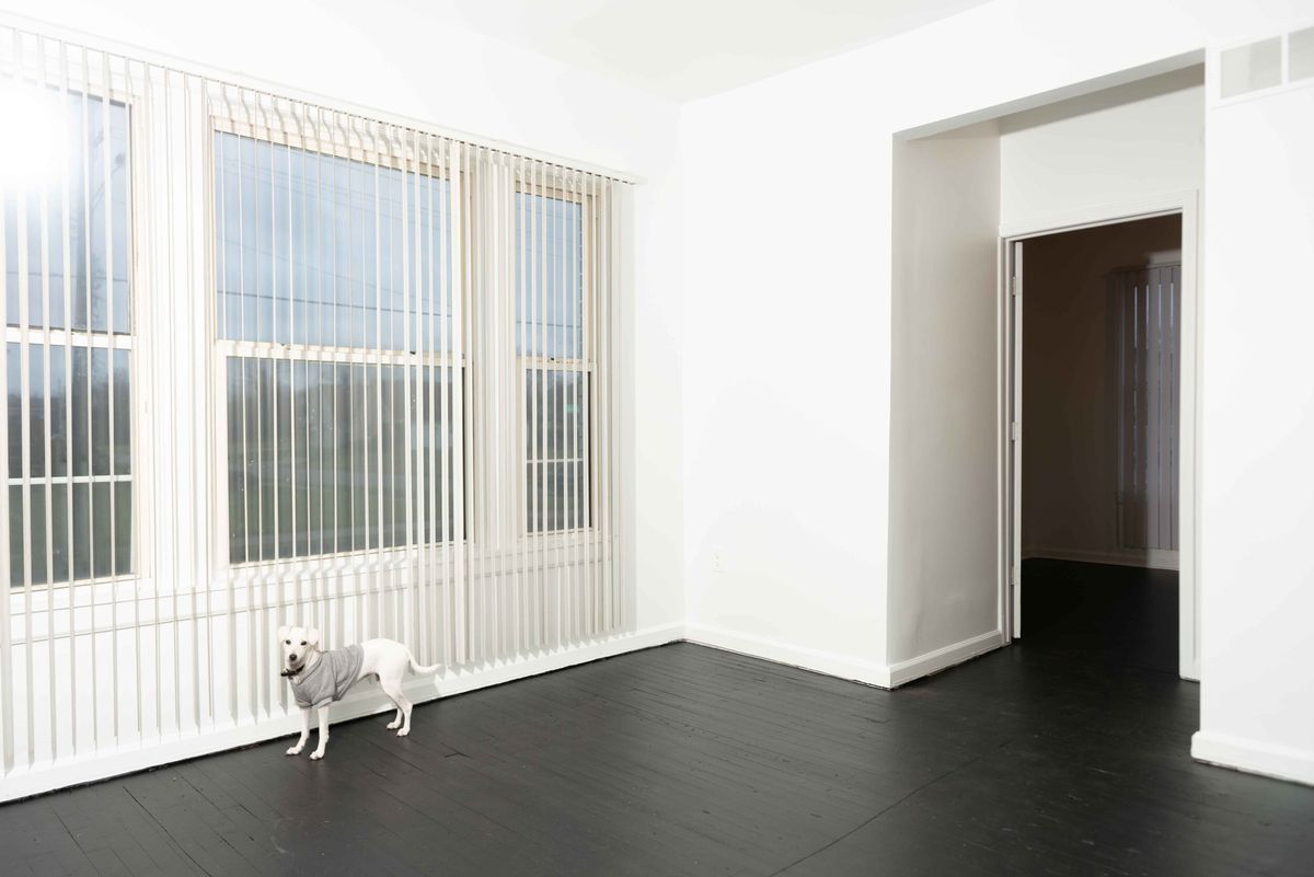 Empty room with dark wood floors and a white dog near a window with white blinds.