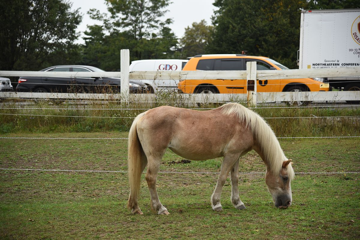 Visiting New York City's last horse stables - Curbed NY