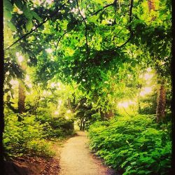 My Monday mornings always start out with a good run and if the weather is nice, there's no other place for me than the bridle path and the rambles in <b>Central Park</b>. I try and squeeze in three to five miles before my first meeting or call for the wee