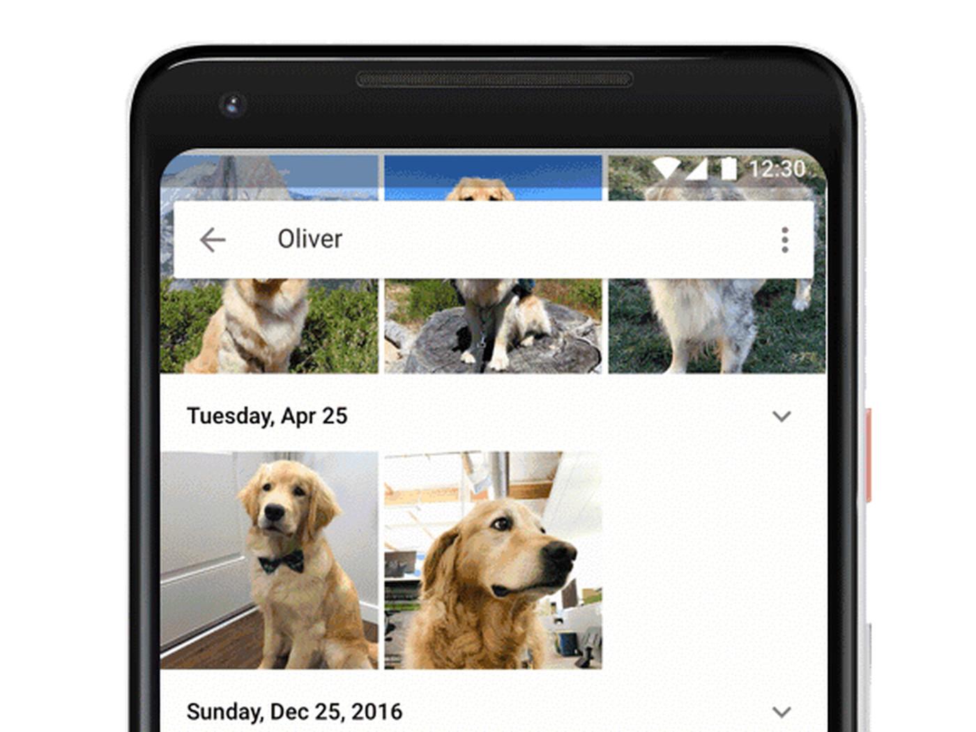 Google Photos Now Recognizes Your Pets The Verge