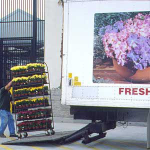 <p>HOME CENTERS OFFER great prices on common plants, but you must act quickly because plants in good shape sell out fast and those that remain aren't well maintained.</p>