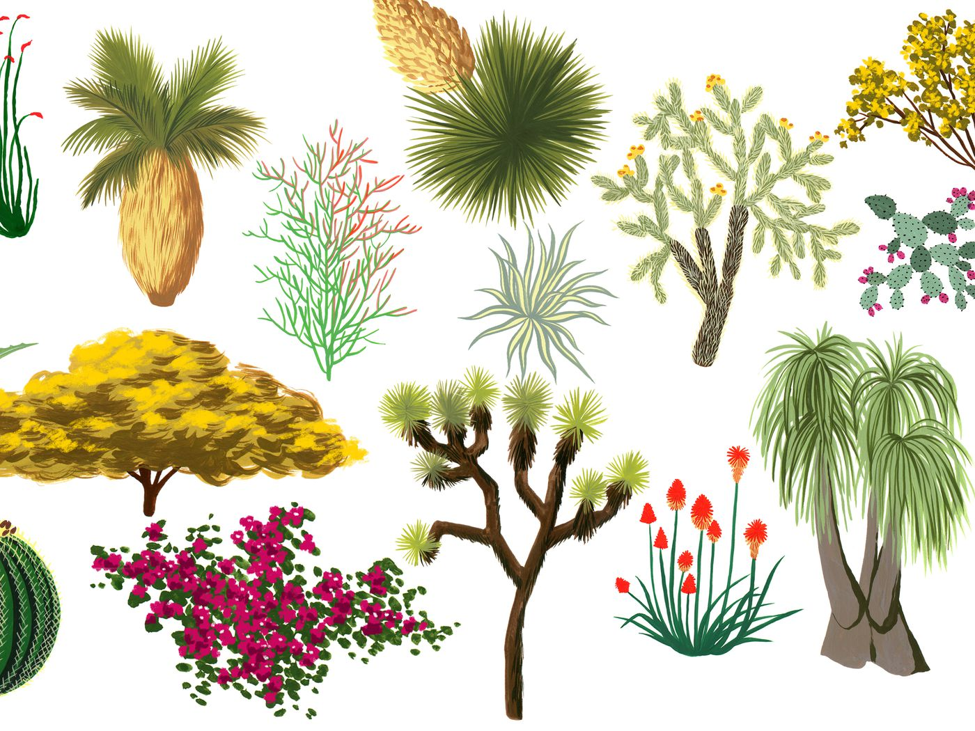 California Desert Plants An Illustrated Guide Curbed La