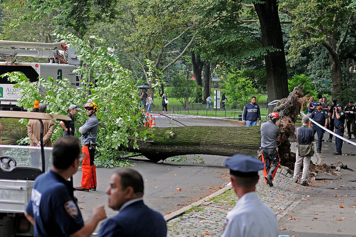 A tree fell on a family in Central Park in 2017.