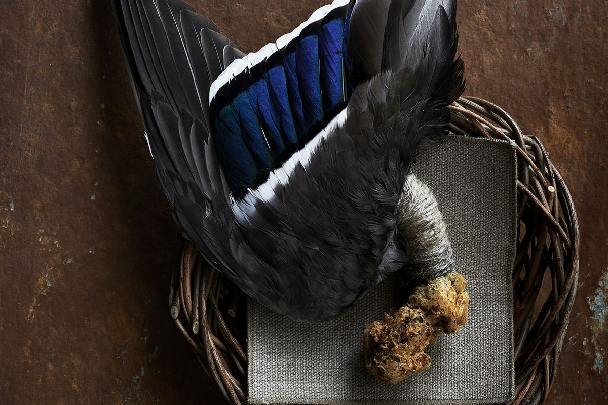 A duck wing from Noma that features feathers still in tact.
