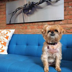Across the street, {Neighborhood} sells modern furniture in a vibrant palette. Plus, this cute dog is there sometimes.
