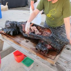 April Bloomfield, Barbecued Whole Mulefoot Hog