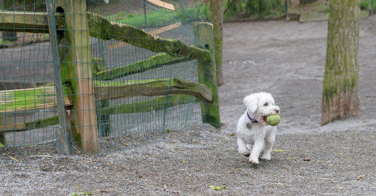 Seattles Best Dog Parks Mapped Curbed Seattle