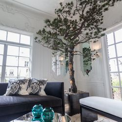 """At night the trees cast playful shadows on the surrounding space by the wall scones behind them. [Photo by <a href=""""http://www.patriciachangphotography.com/"""">Patricia Chang</a>]"""