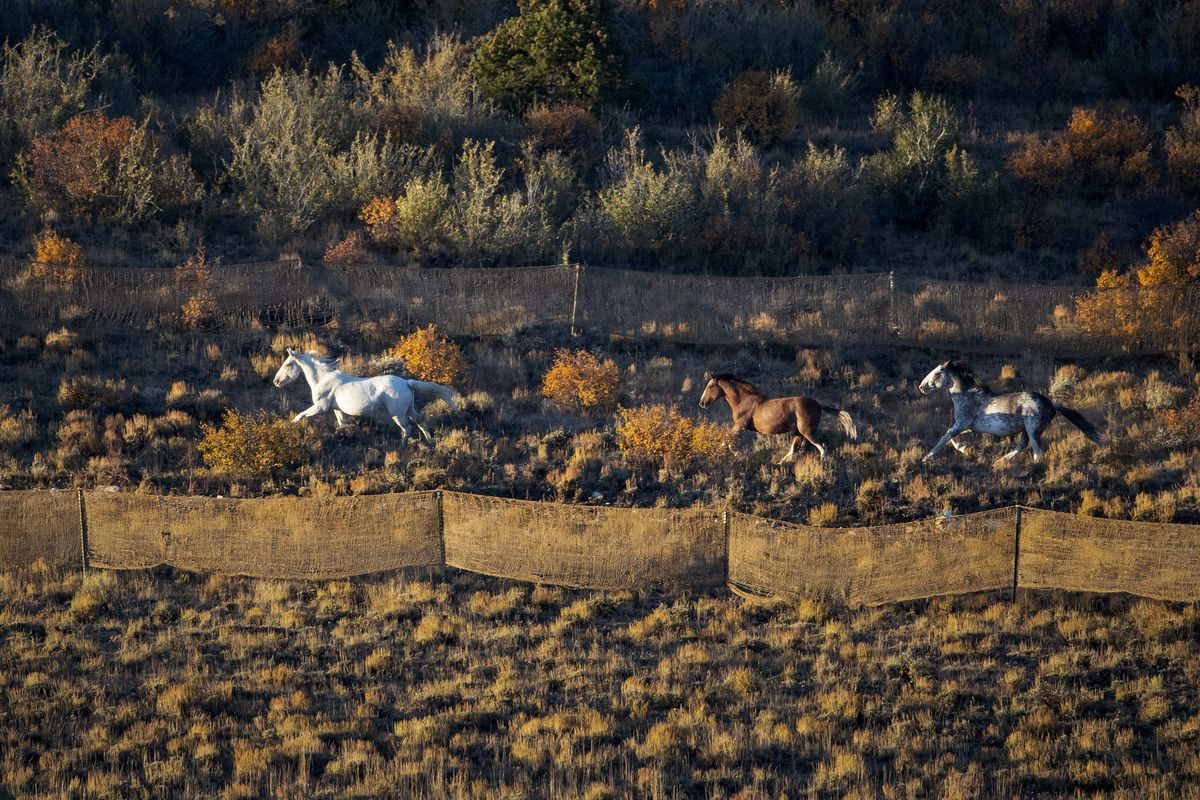 Spaying Wild Horses Why Some Animal Advocates Decry A Utah Plan Deseret News