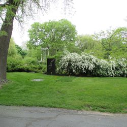 5/12/15: Ernie's shrub in bloom, sod is taking hold -