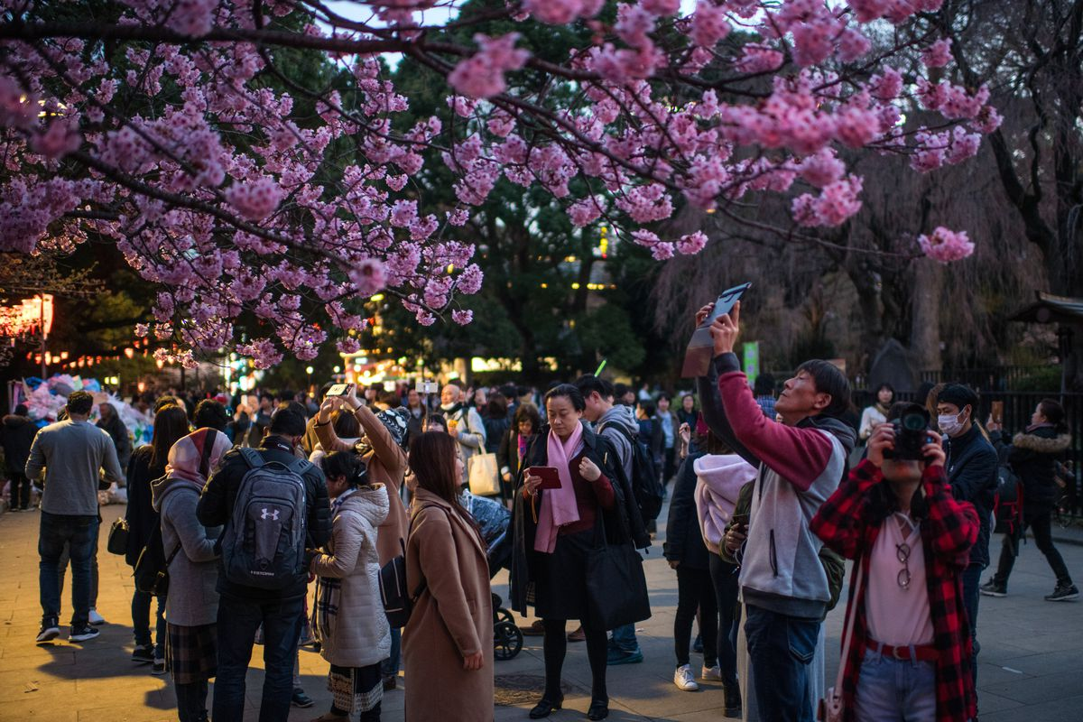 People Enjoy Cherry Blossom In Tokyo
