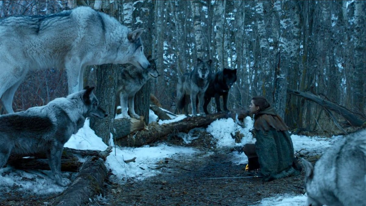 nymeria on game of thrones