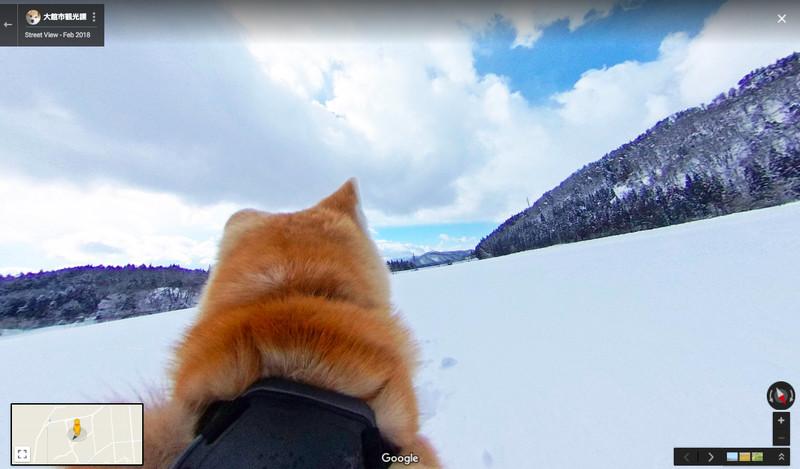 Excursión de perros Akita en Google Maps