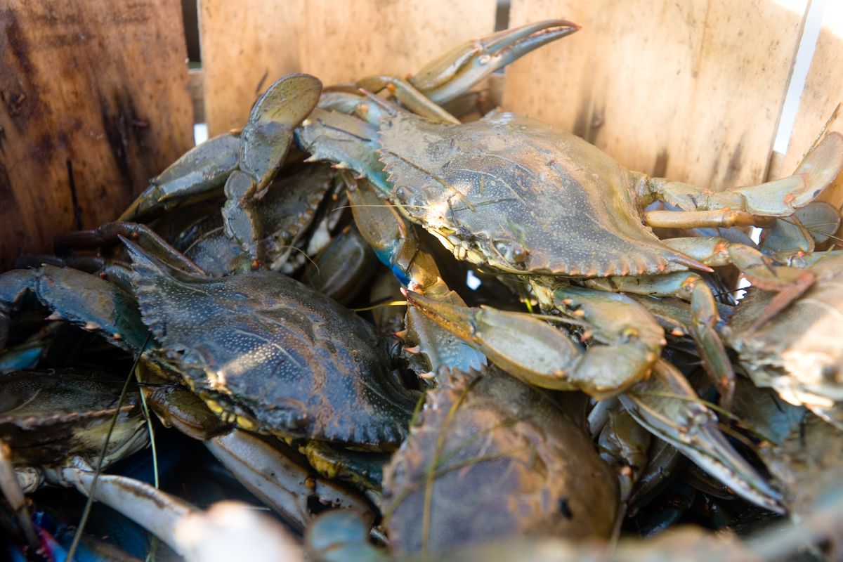 Chesapeake bay, Tylerton, waterman, crab, Bill Clayton