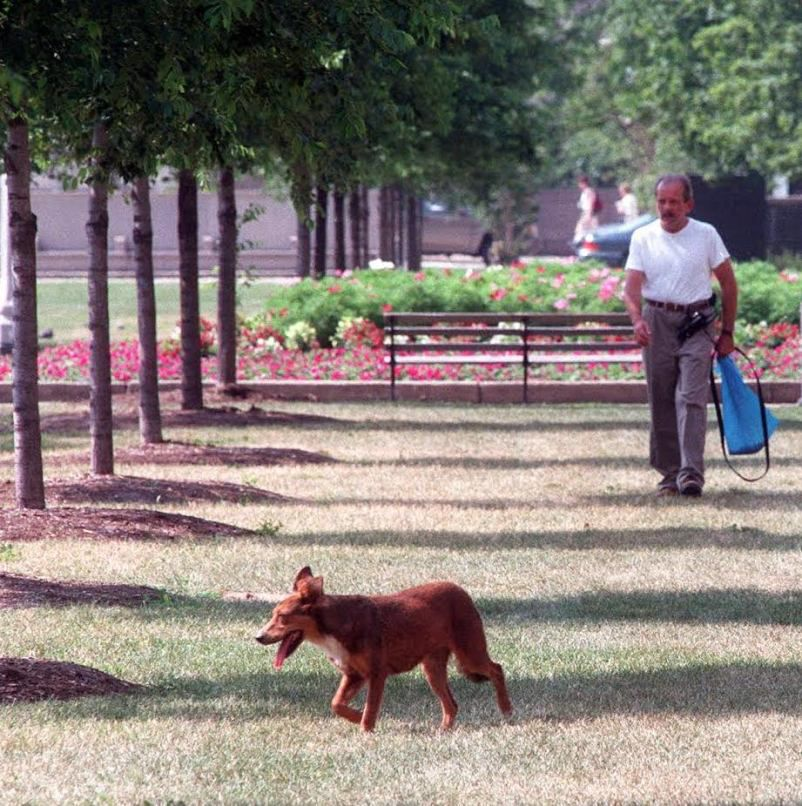 """Bill Caprio tracking a stray dog, dubbed """"Summer Dance"""" by city workers, in Grant Park in 1998. 